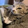 野良猫が産んだ子供たち