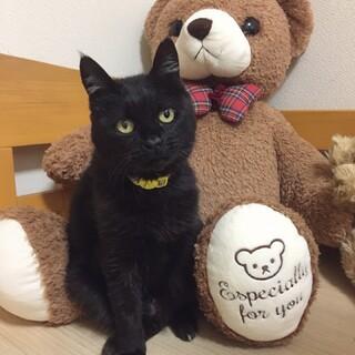 小柄で凛々しい黒猫のヤマトくん☆