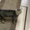 少し臆病で猫好きなキジトラ☆ののちゃん サムネイル5
