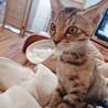 生後3-4ヶ月の子猫の里親さん募集中 サムネイル2