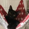 11月限定【野崎参道商店街】大人猫の譲渡会