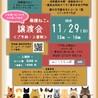11.29予約制藤井寺保護猫譲渡会参加猫♀三毛 サムネイル6