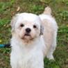 譲渡対象犬のご紹介0901-5 サムネイル2