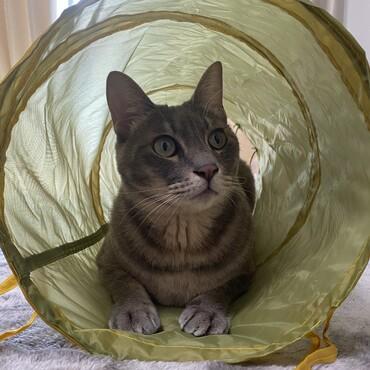 スリコの猫トンネル。