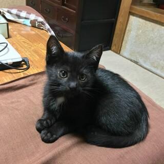 野良猫ちゃんが産んだ三兄妹の子猫です (そのいち