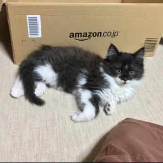 野良猫ちゃんが産んだ三兄妹の子猫です (そのに