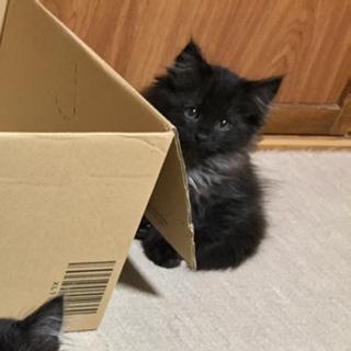 野良猫ちゃんが産んだ三兄妹の子猫です (そのさん