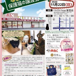 なまえのない猫 保護猫の譲渡会 ドラッグストアmac東雲店