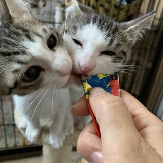 肩のり子猫 あまえんぼ★のんちゃん