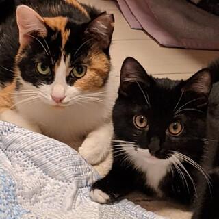 くつ下履いたクロ猫(仔猫)と黒三毛