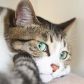 あおみどり色の澄んだ瞳が美しい♡シャイなおとな猫