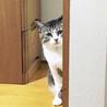 あおみどり色の澄んだ瞳が美しい♡シャイなおとな猫 サムネイル4