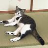あおみどり色の澄んだ瞳が美しい♡シャイなおとな猫 サムネイル6