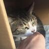 あおみどり色の澄んだ瞳が美しい♡シャイなおとな猫 サムネイル7