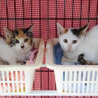 お腹を空かせていた子猫たち