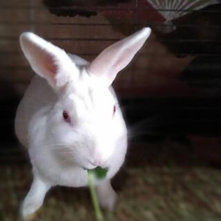 なで好きなウサギさん