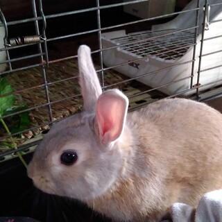 好奇心旺盛な、男の子ウサギさん