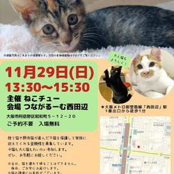 11/29 ねこチュー譲渡会