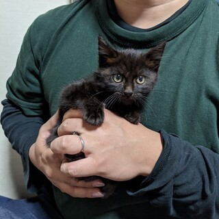 黒猫のコッペちゃん☆