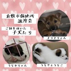 倉敷市保健所譲渡会報告