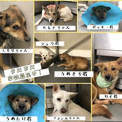 「倉敷市保健所譲渡会報告→全頭卒業!」サムネイル3