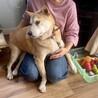 中型犬ミックスの女の子 ウルちゃん サムネイル4