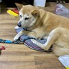 中型犬ミックスの女の子 ウルちゃん サムネイル5