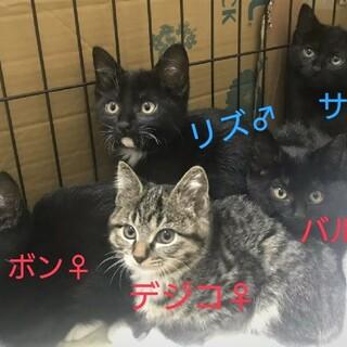 テレサチルドレン!5匹の元気な子猫たち