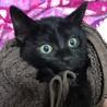 テレサチルドレン!5匹の元気な子猫たち サムネイル5