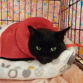 猫さん初心者注目!!かしこかわいい天ちゃん