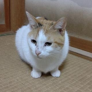 三毛猫 ルンルン