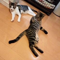 「保護猫ズのお話」サムネイル1