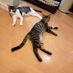 「保護猫ズのお話」サムネイル2