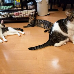 「保護猫ズのお話」サムネイル3