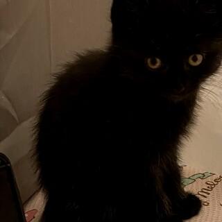 野良の黒猫