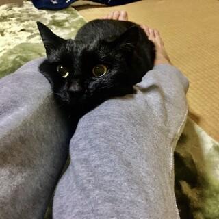 甘えん坊⭐︎黒猫⭐︎男の子