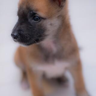 山口県よりYouTube動画有り茶色の子犬