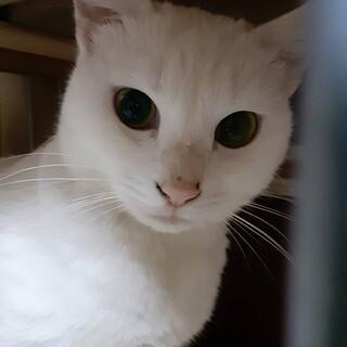 人懐こい白猫の男の子
