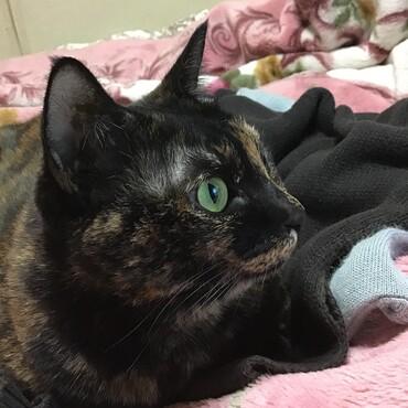暖かくてストーブがまだ出てないの。だからこの毛布の上がサイコーよ!