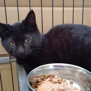 かいとくん♂黒猫
