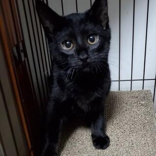 黒猫ゴロー、里親さま決定です
