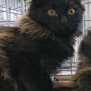 ふわふわ黒猫王子♡ リィン♂