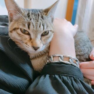 生後3〜4ヶ月の子猫ちゃんの里親さん募集中です
