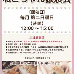 三郷市(⑉•ェ•⑉)保護猫譲渡会