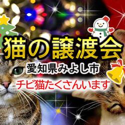 26匹参加(子猫半分/中猫半分)の譲渡会-愛知県みよし市