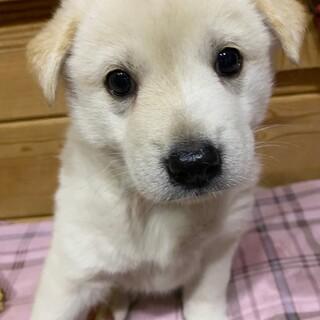 チーズちゃん☆2ヶ月の家族を探してます。