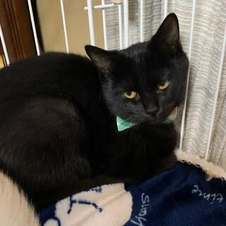 ☆兄弟猫の黒猫クン☆2020年夏生まれ☆