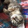 のりまき スリスリストーカー猫