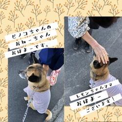 「元野犬Edワンコの朝のお散歩」サムネイル3