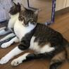 足の不自由な猫 性格穏やか&甘えん坊 雑種
